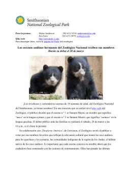 Los oseznos andinos hermanos del Zoológico