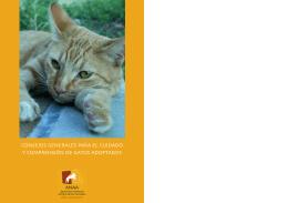 consejos generales para el cuidado y comprensión de gatos