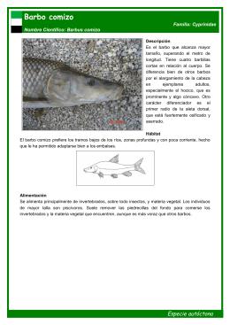 Barbo comizo o picón - Pesca y Ríos en Extremadura