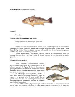 Corvina Rubia (Micropogonias furnieri)