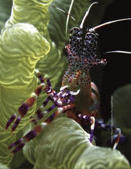 Foto: Quetzalli Sotelo - Biodiversidad Mexicana