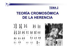 TEMA 3: Teoría cromosómica de la herencia