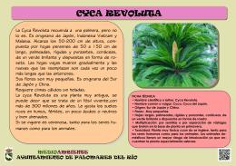 CYCA REVOLUTA - Ayuntamiento de Palomares del Río