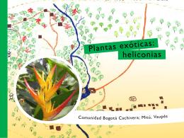 Plantas exóticas: heliconias