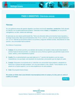 PASO 3 DIGESTIVO: Glándulas anexas