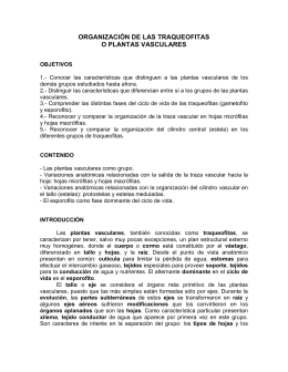 ORGANIZACIÓN DE LAS TRAQUEOFITAS O PLANTAS