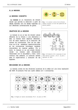 8) LA MEIOSIS LA MEIOSIS: CONCEPTO La meiosis es