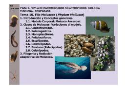 Filo moluscos - OCW - Universidad de Murcia