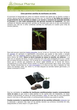 Cómo germinar semillas de marihuana con éxito. Al