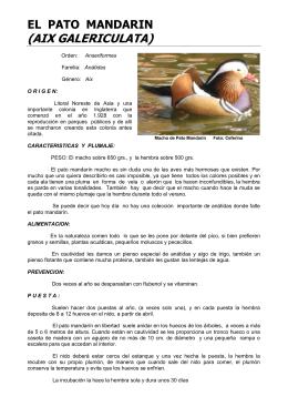 El Pato Mandarín (Aix Galericulata)