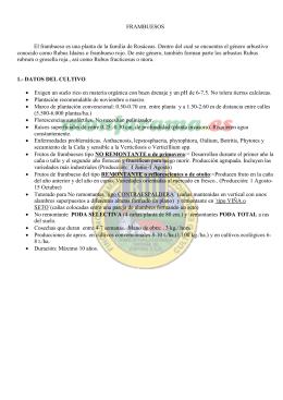pdf – ficha técnica frambueso
