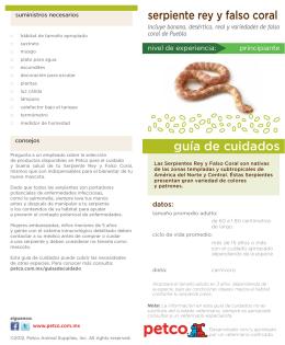 Serpiente Rey Y Falso Coral