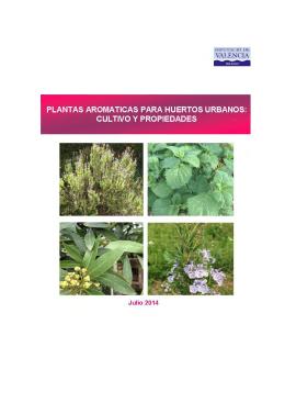 Plantas aromáticas para huertos urbanos