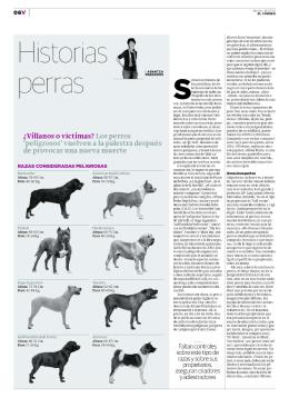 Historias perras - Adiestramiento Canino