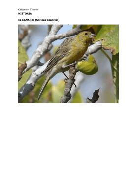 Canariocultura pdf - Canarios de Salala