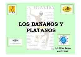 LOS BANANOS Y PLATANOS