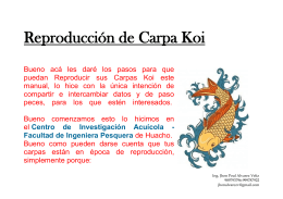 Reproduccion de Carpa Koi