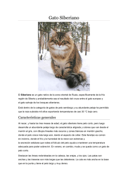 Gato Siberiano - WordPress.com