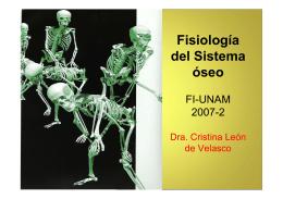 Sistema óseo Fisiología