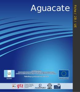 Aguacate Ficha / 28 / UE