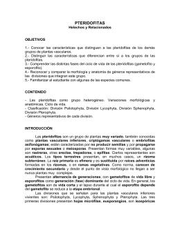 Helechos I y II, morfología y reproducción