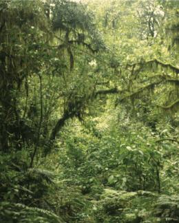 Selva Tucumano Boliviana