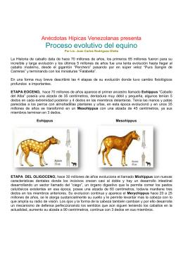 Proceso evolutivo del equino - Anécdotas Hípicas Venezolanas