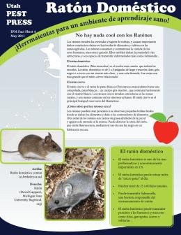 Ratón Doméstico - Utah Pests