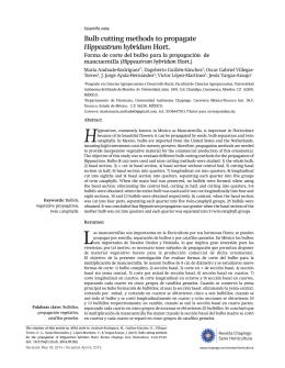 Bulb cutting methods to propagate Hippeastrum hybridum Hort.
