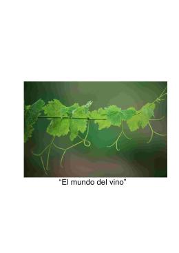 """""""El mundo del vino"""""""