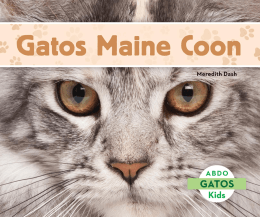 Gatos Maine Coon - Gatos