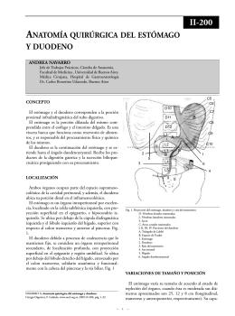 Anatomía quirúrgica del estómago y duodeno.