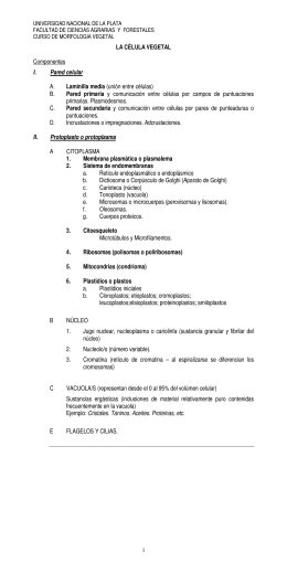 LA CÉLULA VEGETAL Componentes I. Pared celular A. Laminilla