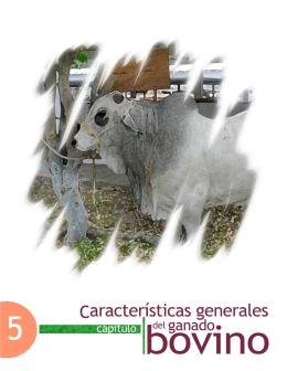 Características generales del ganado bovino - FMVZ-UNAM