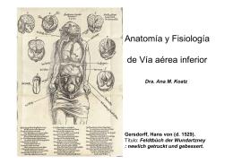 Anatomía y Fisiología de Vía aérea inferior