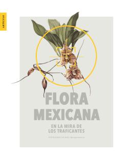 FLORA MEXICANA En la mira de los traficantes