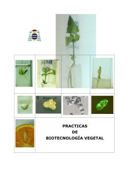 PRACTICAS DE BIOTECNOLOGÍA VEGETAL