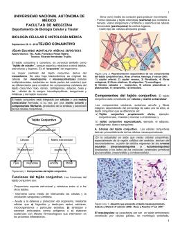 Tejido Conjuntivo - Facultad de Medicina