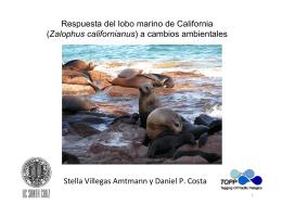 Respuesta del lobo marino de California (Zalophus californianus) a