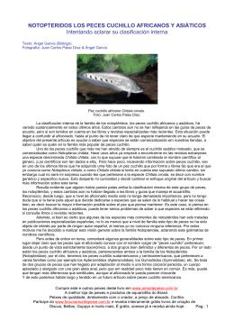 NOTOPTERIDOS LOS PECES CUCHILLO AFRICANOS Y