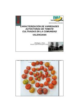 caracterización de variedades autóctonas de tomate