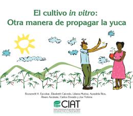 El cultivo in vitro: Otra manera de propagar la yuca