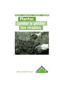 Plantar, cuidar y podar los rosales