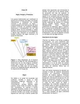 Clase VII Algas, Hongos y Protozoos Los grupos tradicionales que