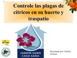 Controle las plagas de cítricos en su huerto y traspatio