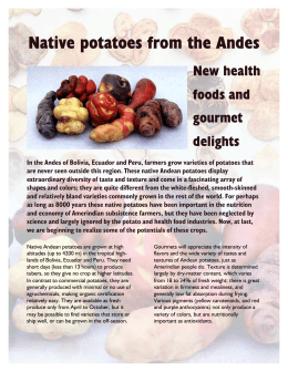 Native potatoes from the Andes