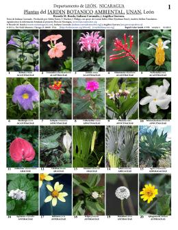 Plantas del JARDIN BOTANICO AMBIENTAL, UNAN
