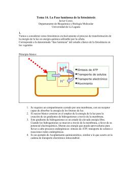Tema 14. La Fase luminosa de la fotosíntesis