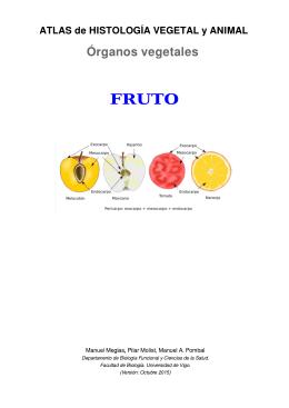 Descargar el fruto en pdf - Atlas de Histología Vegetal y Animal