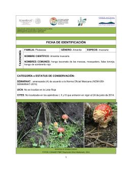 Amanita muscaria - El Parque Nacional Izta-Popo